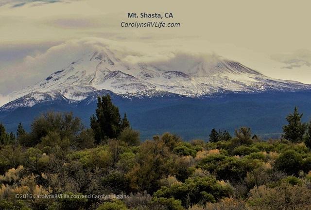 mt shasta weed California