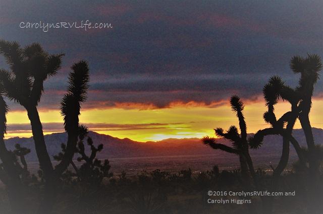sunset nevada desert joshua trees