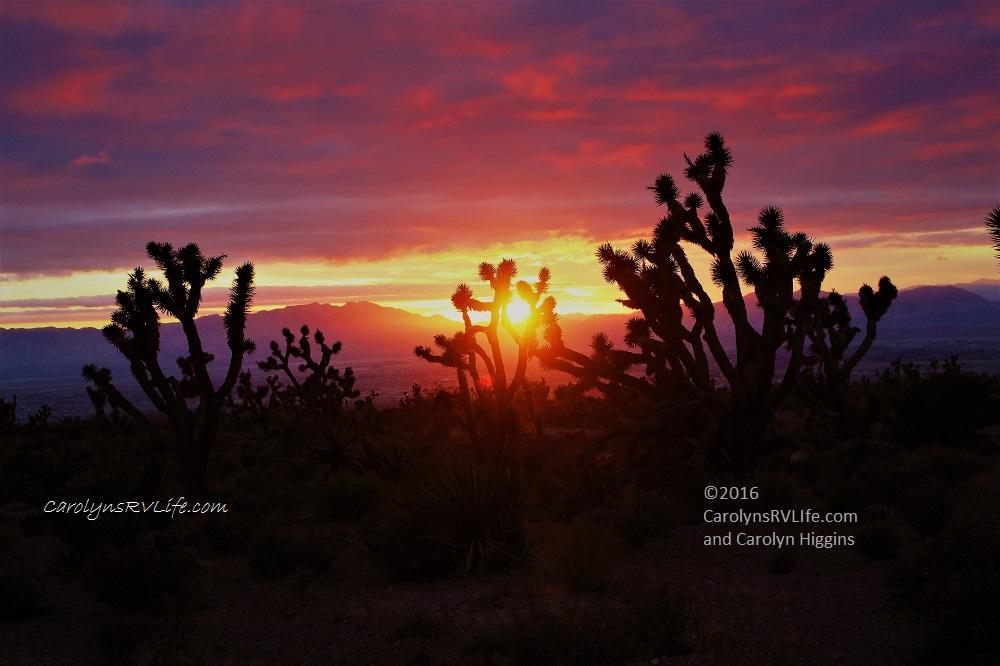 desert sunset joshua tree nevada sunset