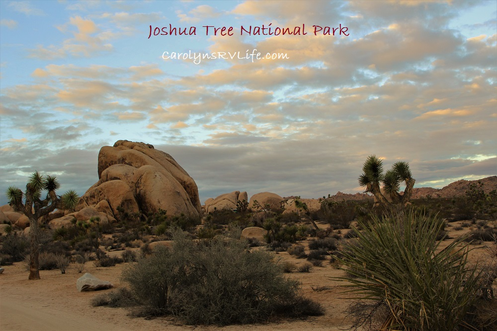 joshua-tree-scene