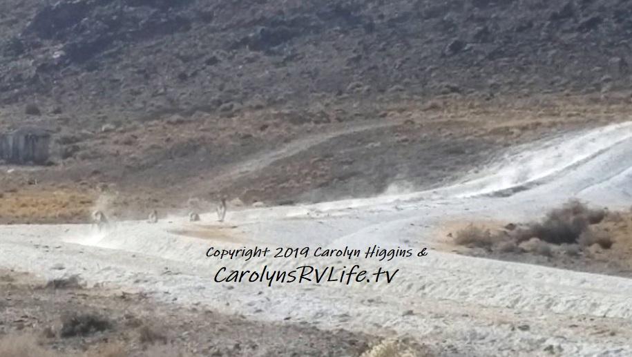 Big Horn Sheep at Warm Springs NV - Carolyn's RV Life